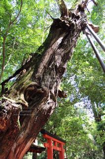 木の写真・画像素材[572087]
