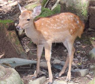 動物の写真・画像素材[572090]