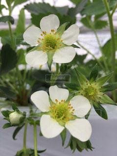 花の写真・画像素材[573555]