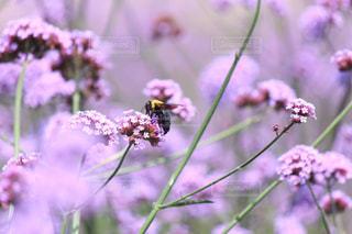 花の写真・画像素材[573570]