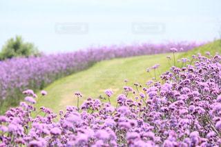 花の写真・画像素材[573573]