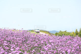 花の写真・画像素材[573576]