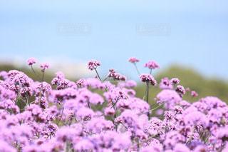 花の写真・画像素材[573592]