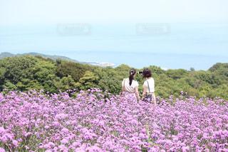 花の写真・画像素材[575036]