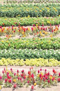 花の写真・画像素材[575055]