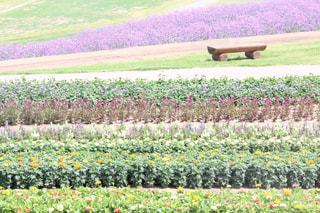 花の写真・画像素材[575057]