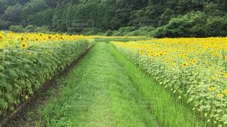 夏の写真・画像素材[617429]