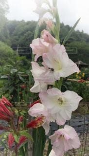 花の写真・画像素材[648238]