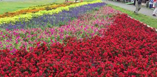 花の写真・画像素材[651900]