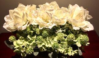 白い花の写真・画像素材[701767]