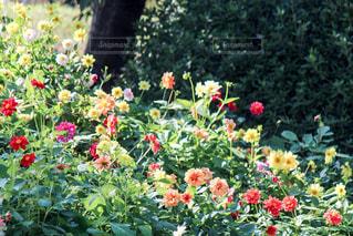フラワー ガーデンの写真・画像素材[852443]