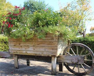 公園の木製ベンチの写真・画像素材[852525]
