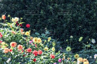 フラワー ガーデンの写真・画像素材[852544]