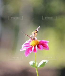 花と蝶 - No.852554
