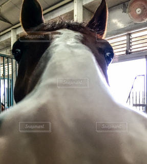馬の写真・画像素材[901457]