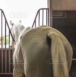 馬の写真・画像素材[901458]