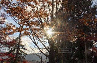 紅葉の中の太陽の写真・画像素材[907395]