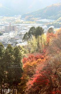 山からね見下ろす街並街並みの写真・画像素材[907397]