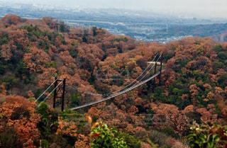 吊り橋の写真・画像素材[927115]