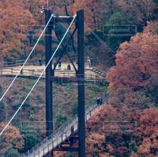 吊り橋の写真・画像素材[927119]