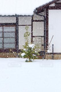 雪に覆われた建物の写真・画像素材[983364]
