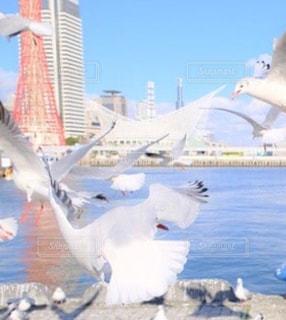 飛んでいる カモメの群れの写真・画像素材[1057694]
