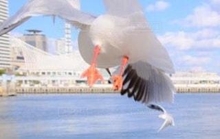 飛んでいる鳥の写真・画像素材[1057695]