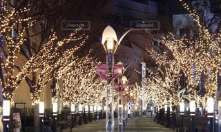 ライトアップされた街路樹の写真・画像素材[1088822]