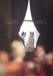 カメラを見ている猫の写真・画像素材[1108036]