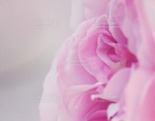 近くの花のアップ - No.1108048