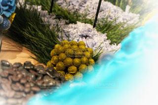近くの花のアップの写真・画像素材[1108065]