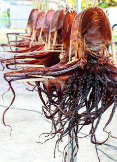 吊るされた蛸の写真・画像素材[1375949]
