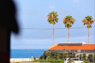 晴れた日にヤシの木のグループの写真・画像素材[1376719]
