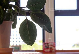 窓の前で花と花瓶の写真・画像素材[1376720]