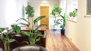 リビング ルームは、家具と植物でいっぱいの写真・画像素材[1376721]