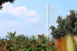 木々から覗き込む明石海峡大橋の写真・画像素材[1419489]