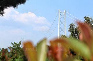 木々から覗き込む明石海峡大橋の写真・画像素材[1419491]