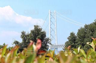 木々から覗き込む、明石海峡大橋の写真・画像素材[1419505]