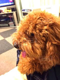 犬 - No.388234