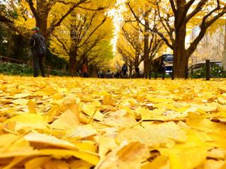 秋の写真・画像素材[1656827]