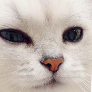 猫 - No.376386
