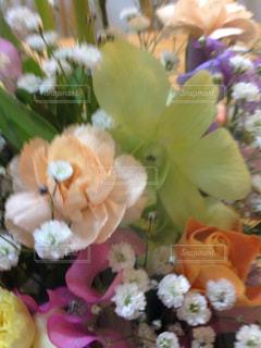 花の写真・画像素材[384175]