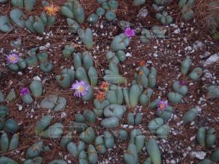 花の写真・画像素材[388666]