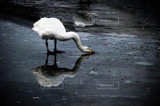 冬の写真・画像素材[376699]