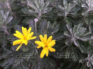 花の写真・画像素材[411799]