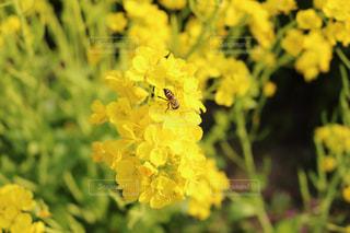花の写真・画像素材[415676]