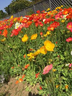 花の写真・画像素材[466710]