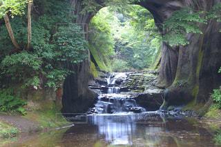 濃溝の滝の写真・画像素材[1286135]