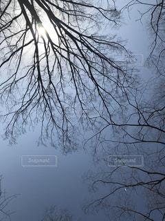 近くの木のアップの写真・画像素材[1061465]