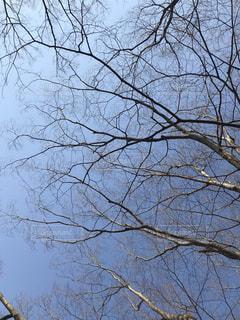 近くの木のアップの写真・画像素材[1061466]